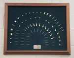 Pat Silver Concert Band Plaque Circa 1989 by Southern Adventist University