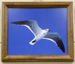Seagull by John Beckett